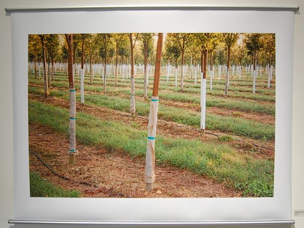 John Woodin examines cultivated landscapes at Crane Arts