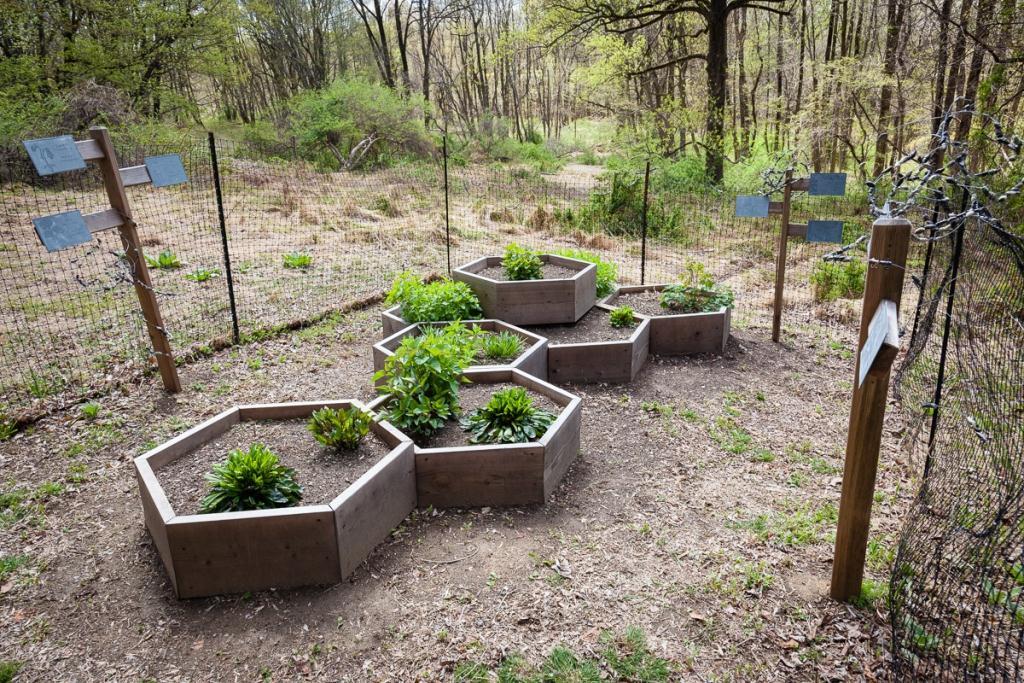 Restoring the land through environmental art